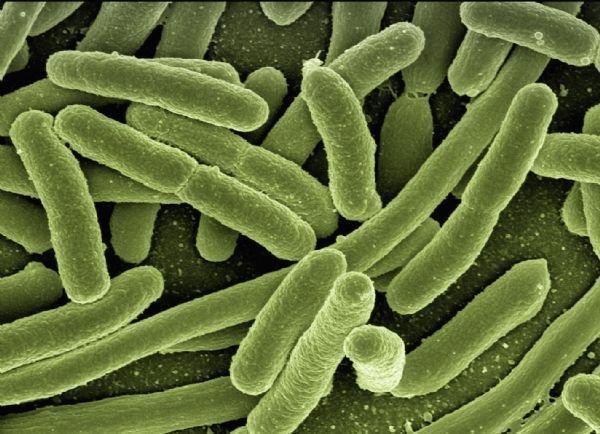 为研究吃细菌的诺奖得主巴里?马歇尔:研制长效疫苗