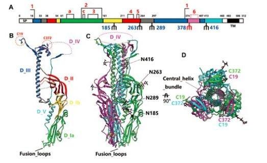 正黏病毒科Thogotovirus属病毒演化研究获进展