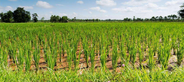 政策暖风徐来 农业板块或迎来布局良机