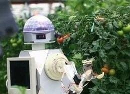 日本诞生全球首个机器人农场 种植几乎全自动化