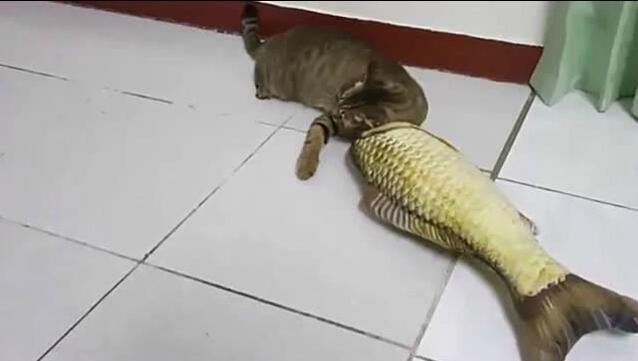 主人买了一个毛绒鱼,结果...