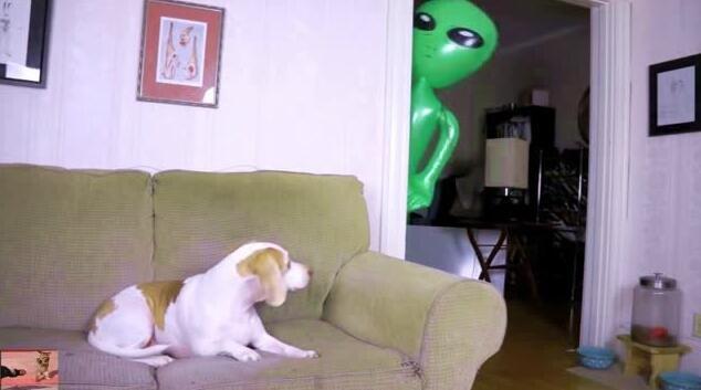 狗狗意外看到外星人