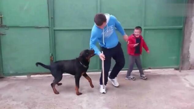 狗狗舍命保护小主人,通人性的好宠物
