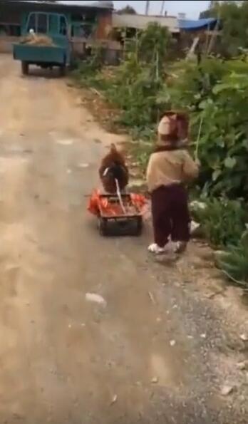 熊孩子终于找到好玩的伙伴了