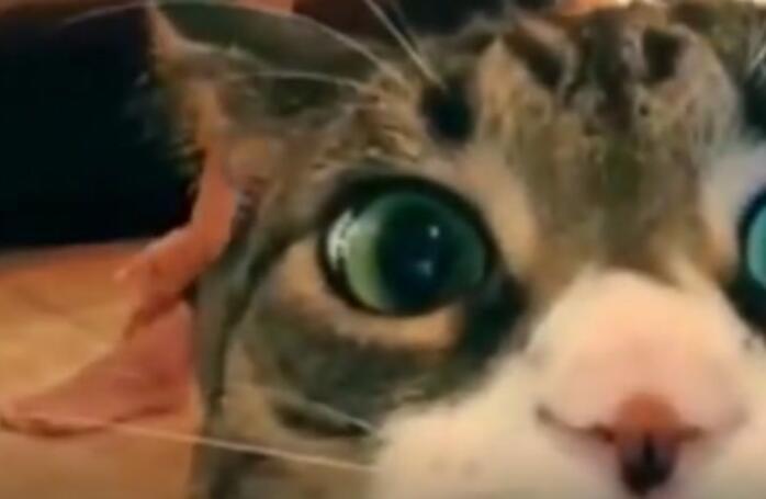 家有这样的猫是一种什么样的体验