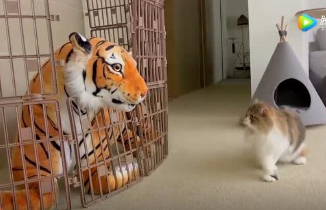 猫咪的胆子也太大了,完全不带怕的