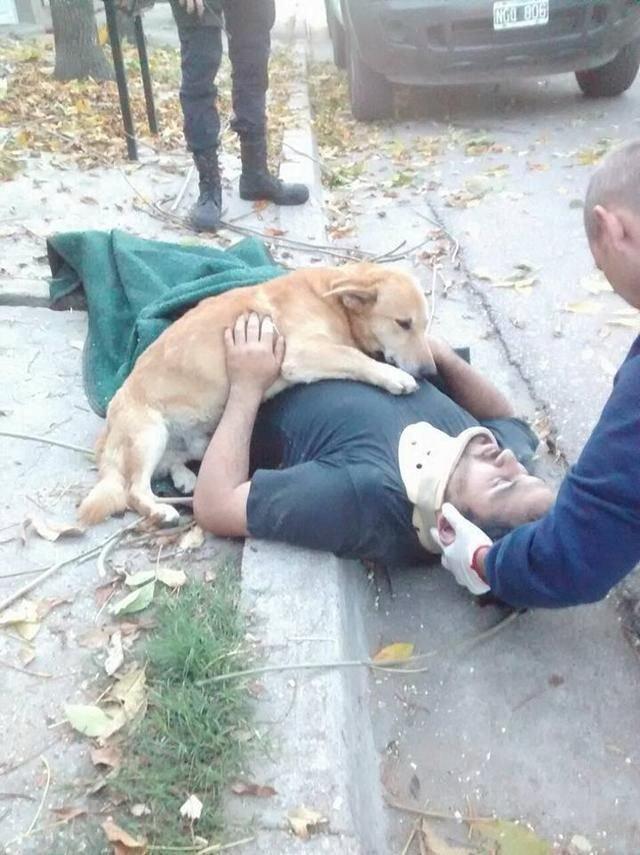 男子不慎从树上摔下瘫痪在地,狗狗的行为叫人不知所措