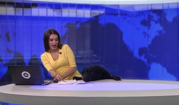 俄罗斯新闻频道主持人播报新闻时黑狗乱入