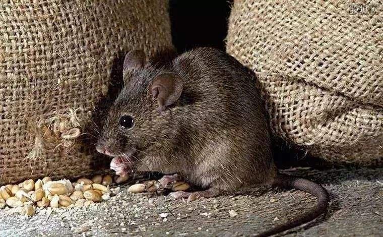 天黑请睁眼 科学家破解小鼠暗觉醒机制