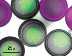 史上最逼真人造细胞问世