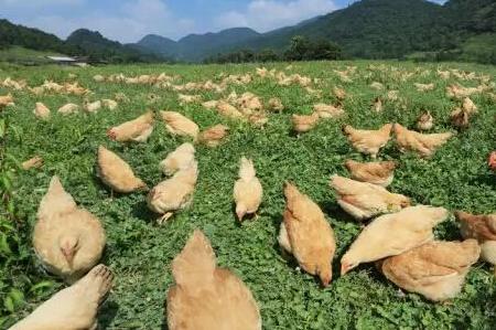 湘佳牧业:多个养殖场未拿到排污证 称2019年可正常运营