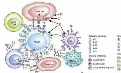 细胞因子在免疫治疗中的应用