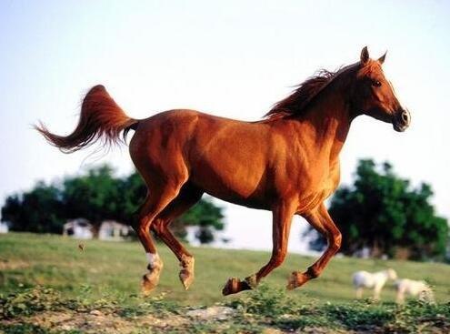 研究人员研究了一种检测马的肠道的新胶囊相机方法