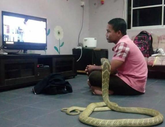 男子与蛇同吃同住 她坚信是去世的女朋友转世