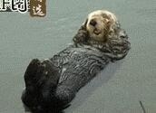 谁能告诉我这只狗狗怎么浮在水面的