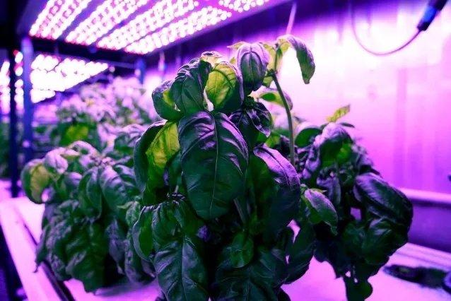 MIT通过机器学习算法控制生长环境 让蔬菜更好吃