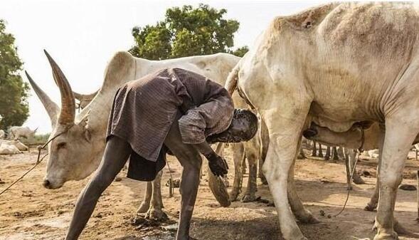 往身上涂牛粪,用牛尿洗头,这个部落的生活每天如此
