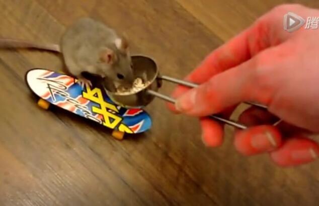 被军事化管理的老鼠,成精了!