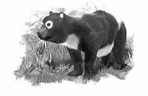 大熊猫的祖先始熊猫吃肉为主存在时间比人类还早