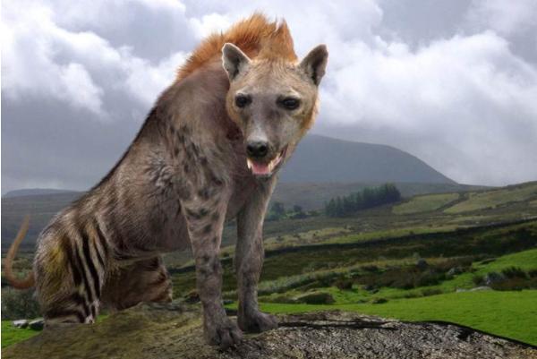 远古巨鬣狗体型重大最大可达760斤