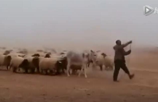 气势磅礴的牧羊人