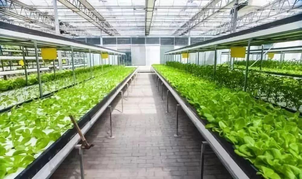 """国家成都农业科技中心将建设农业""""硅谷"""""""
