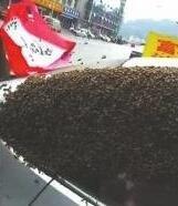 """蜜蜂""""围困""""私家车1个多小时 竟是因为它?"""