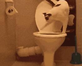 替主人把纸扔厕所