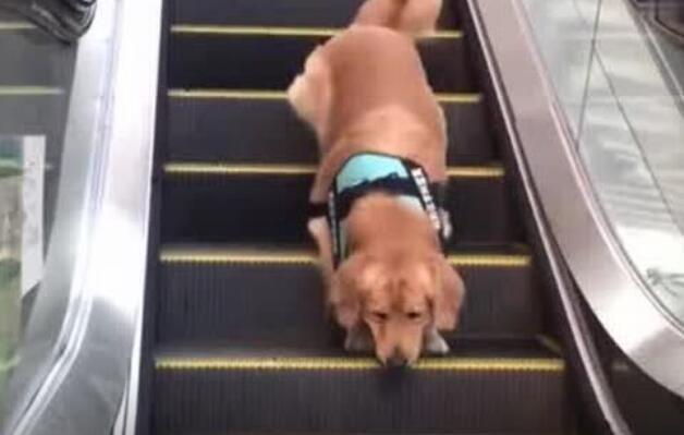 这确实是一个遛狗的好方法