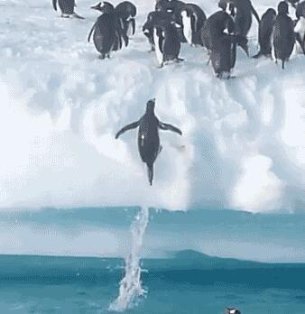 企鹅不仅会跳还会飞呢