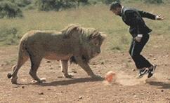 狮子也算是给足面子了