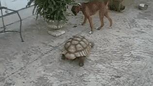没给龟界丢人吧