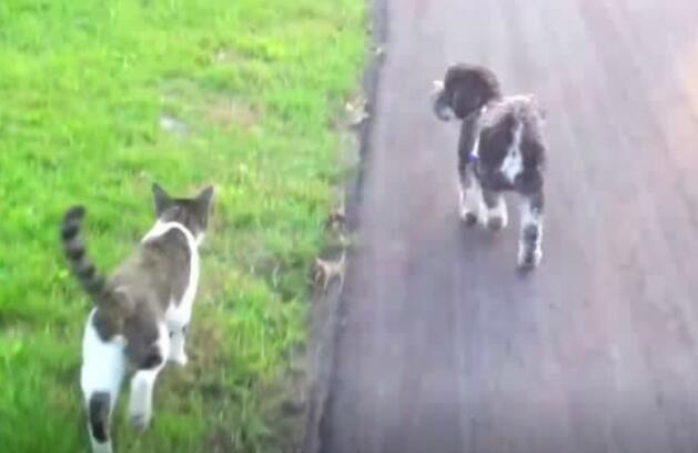 话说兔子和猫谁跑得更快