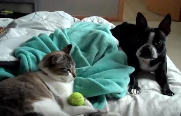 狗那么怕猫吗?在猫身边拿走东西简直拼了命