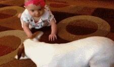 为了家里的宝贝狗狗操碎了心