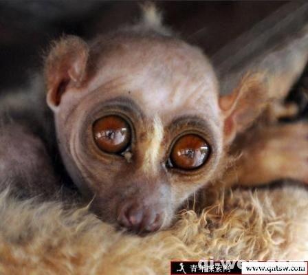 茂名定风猴真实图片 定风猴真的是水鬼吗?