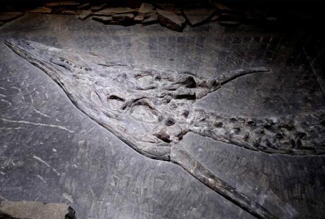贵州大山里出土的这块龙化石 龙首上居然有角