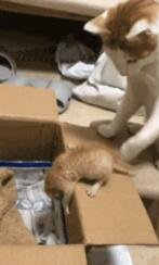 一个没有耐心的猫妈妈