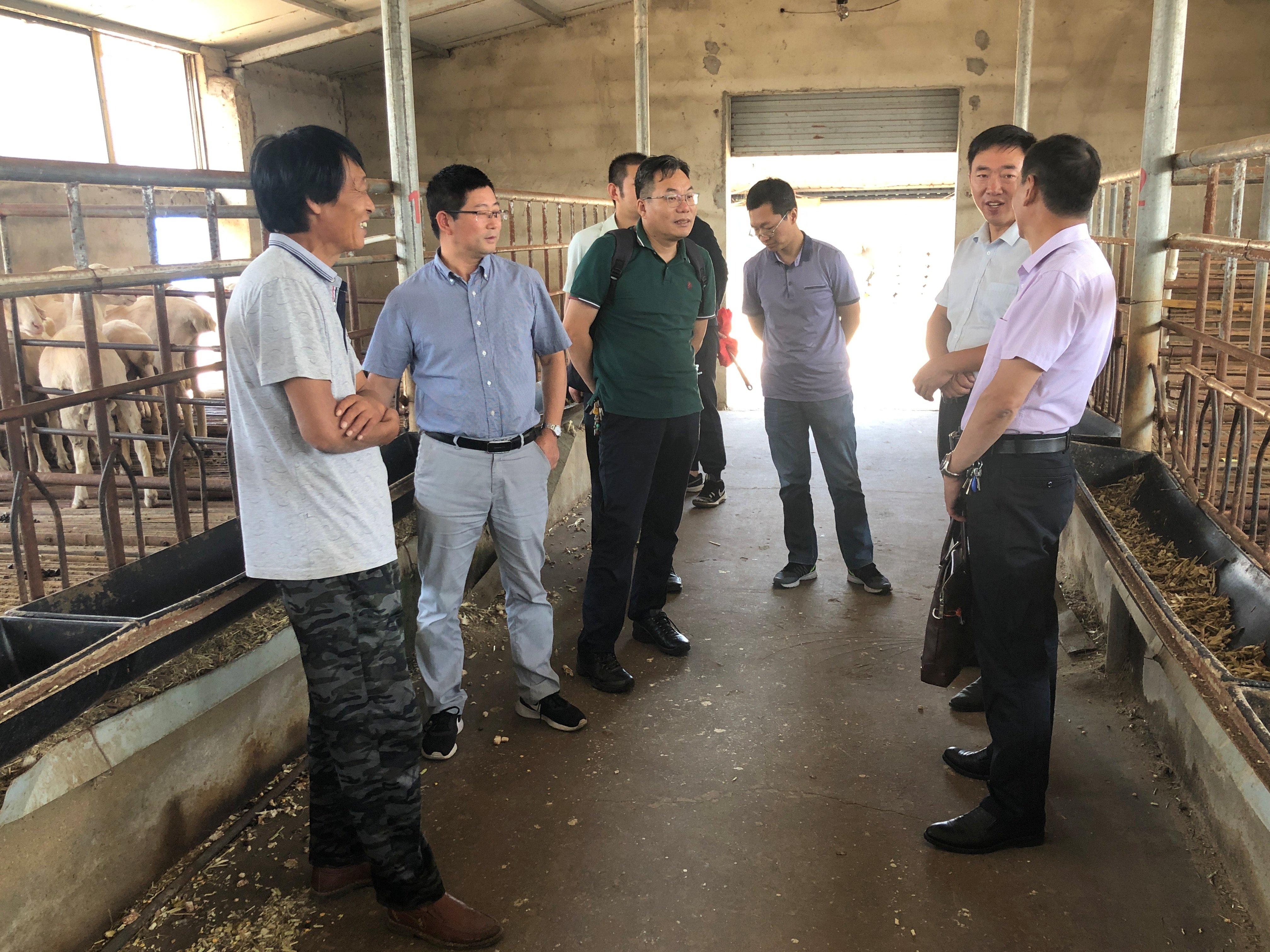 """市鄉村振興農業科技專家服務團畜牧業分團""""走進灌云""""指導養羊生產"""