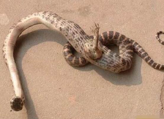 广岛辐射后的蛇怪异恐怖,核辐射变异人活的最为悲惨