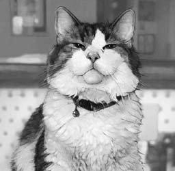 美国一只小猫能准确预测人死亡 提供临终陪伴