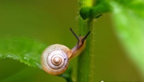 世界上牙齿最多的动物是什么,蜗牛(总共25600颗牙齿)