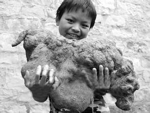 河南一采药人发现200岁何首乌 形体像绵羊(图)