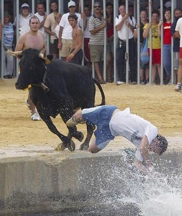 西班牙小镇古怪传统:引牛落海