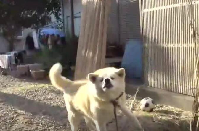 狗子:现在才回来,等你了一天,你不爱我了吗?