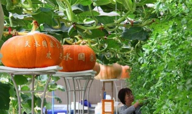 3家通過評估,3家通過驗收,甘肅國家農業科技園區成創新創業重要基地