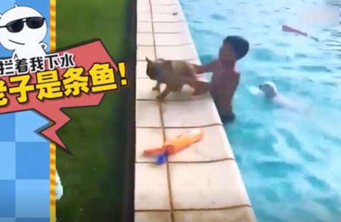 这只狗狗太喜欢游泳了,简直拿他没办法