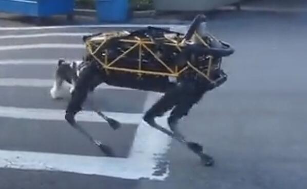 機器狗與狗的較量,你們覺得誰更厲害?