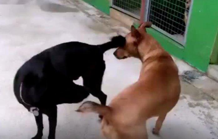 三只腿的残疾狗狗,但是依然不妨碍他勇敢