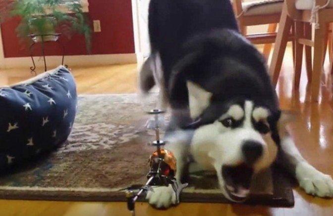 狗狗飞机大战